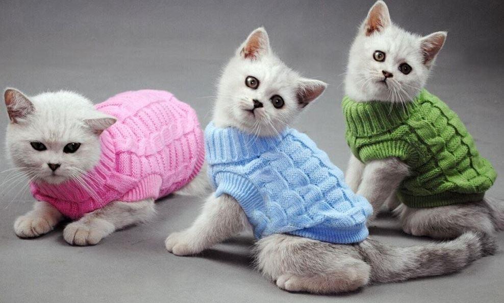вязать одежду для животных
